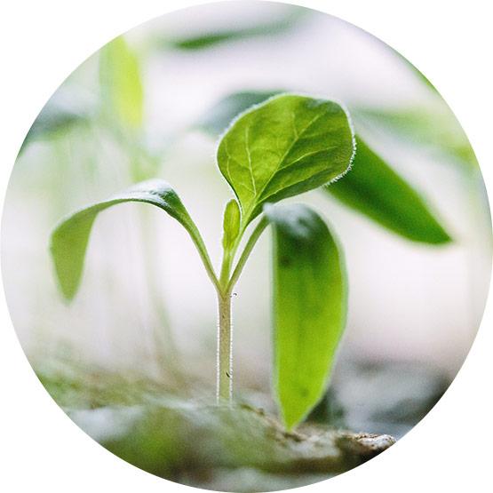Bild einer kleinen wachsenden Pflanze